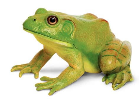 Amphibian (Bullfrog) Object Only for Parts of Fish