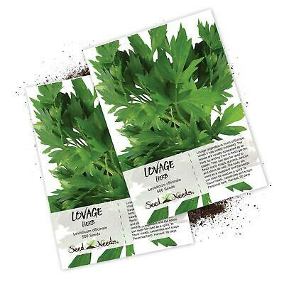 Seed Needs, Lovage Herb (Levisticum officinale) Twin Pack