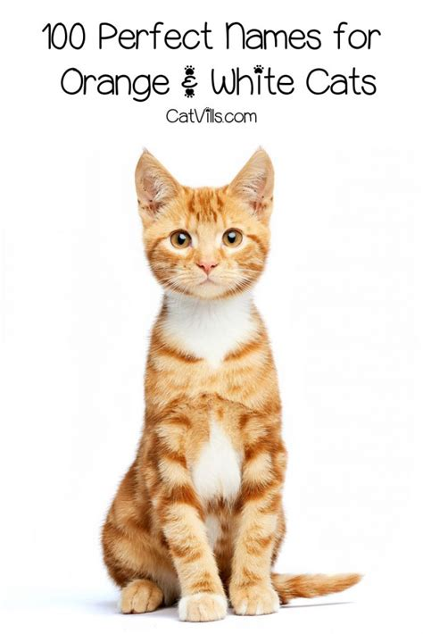 100 Orange and White Cat Names for Your Sweet New Tabby