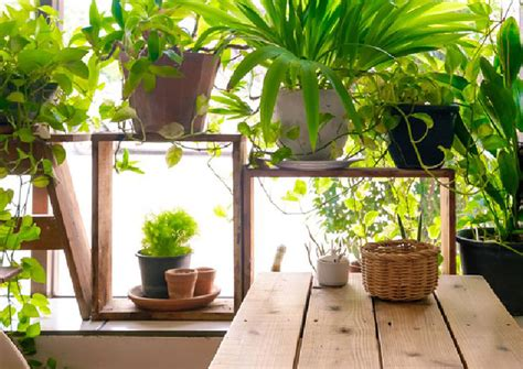 10 good luck plants for your home, Asia News - AsiaOne
