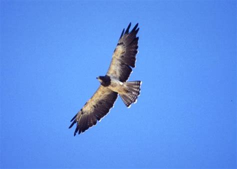 soar meaning and definition