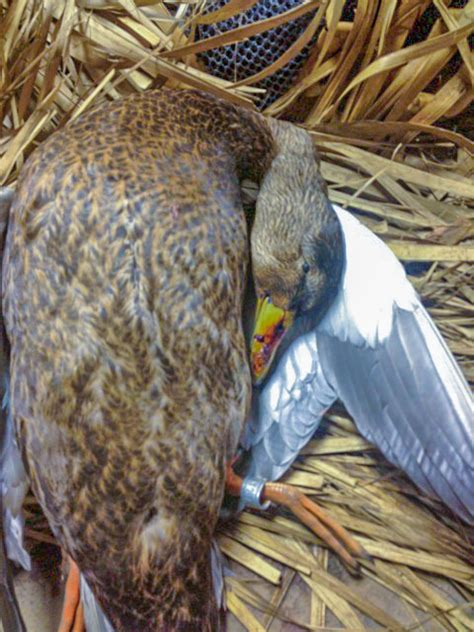 Muddy Creek Outfitters | The Best Waterfowl Hunting in New