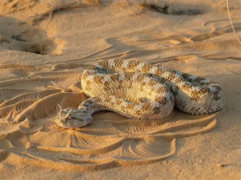 The Most Deadly Snakes in the World   HorizonTimes   Page 20