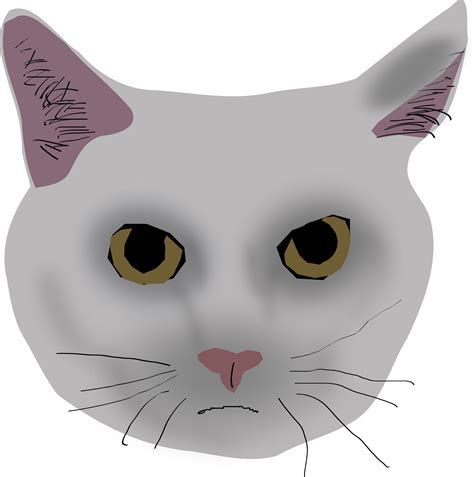 Library of real cat face royalty free png files Clipart